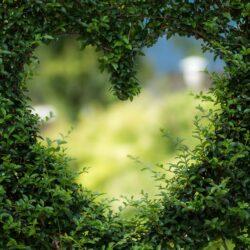Hjerte_pixabay
